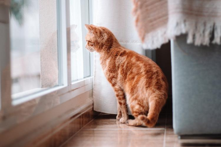 Gato mirando a través de una ventana